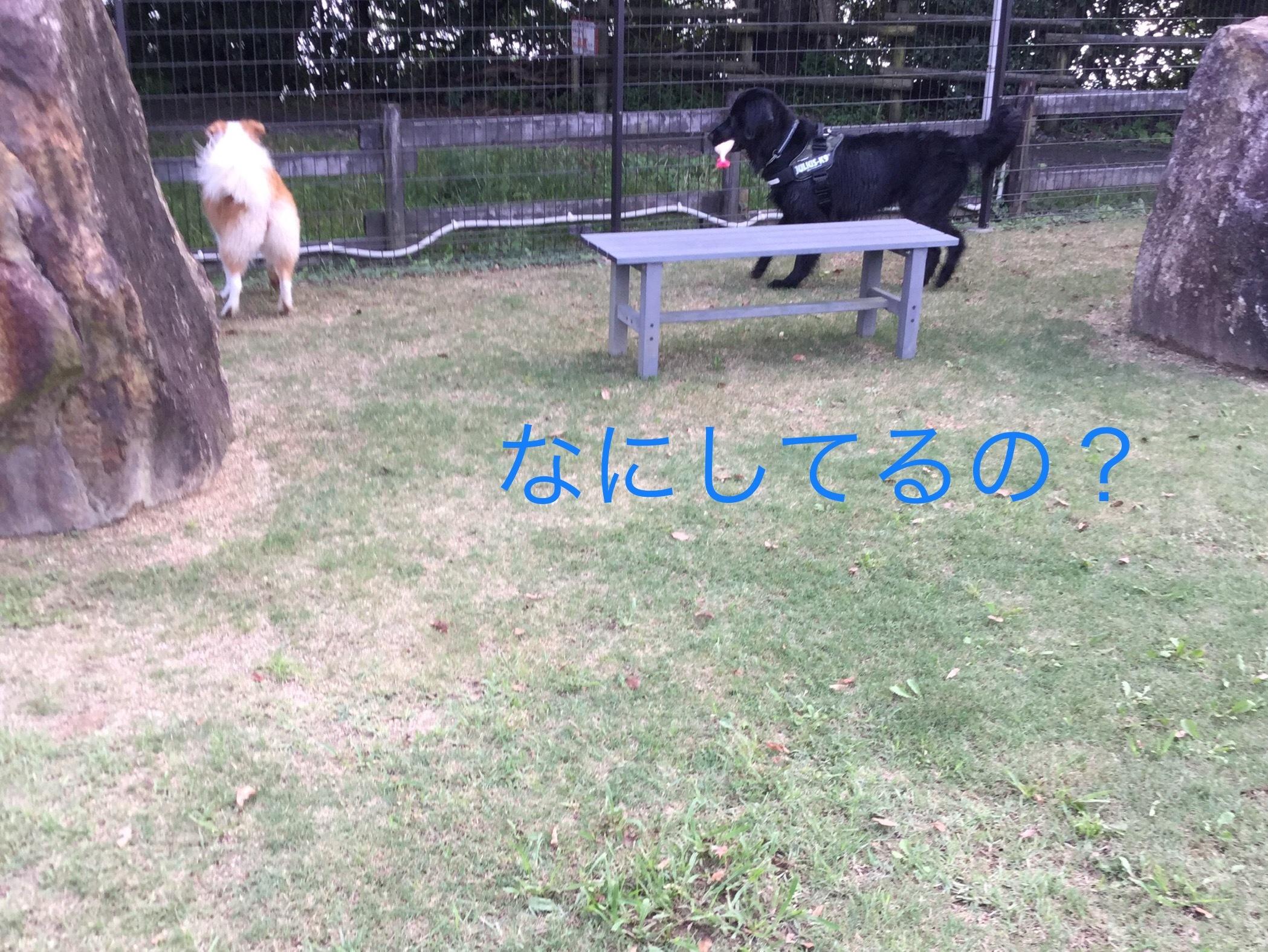 IMG_E2226.jpg