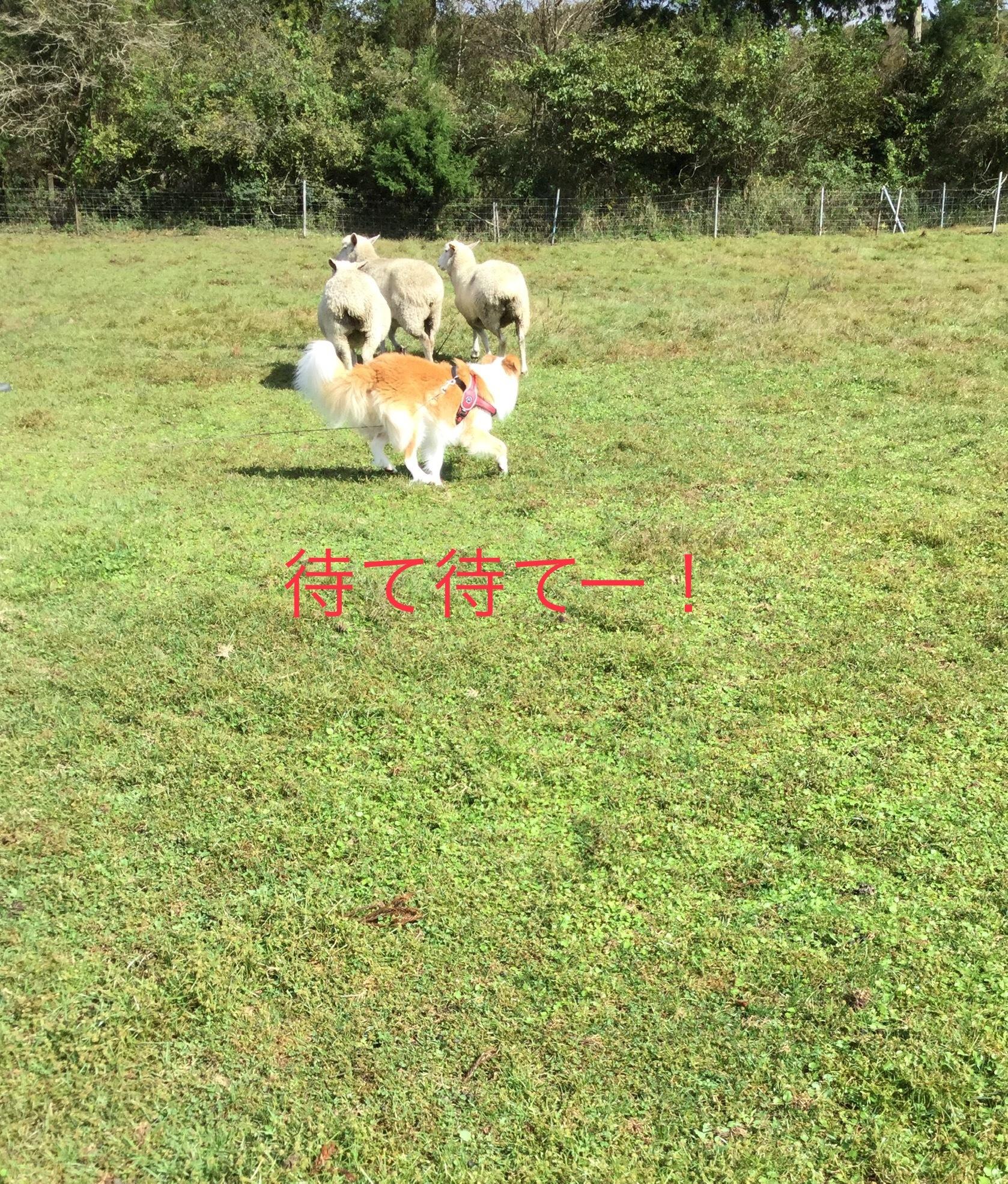 IMG_E2909.jpg