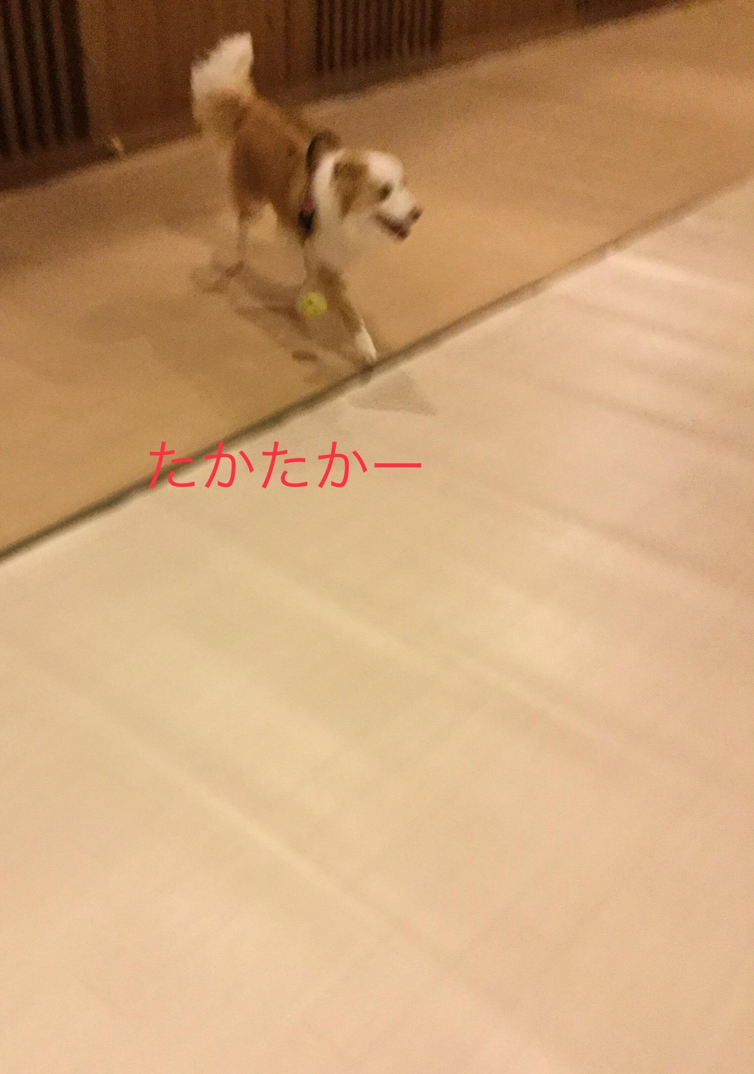 IMG_E2989.jpg
