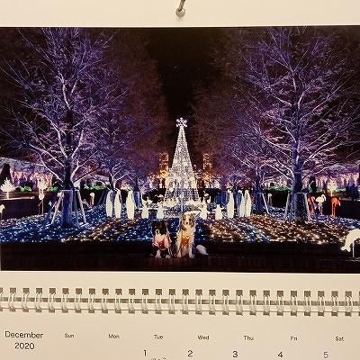 Dec-IMG_20201201_222750_738.jpg