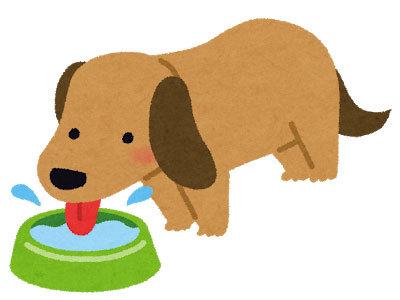 dog_pet_water.jpg