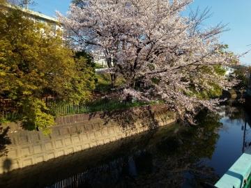 桜 220200406