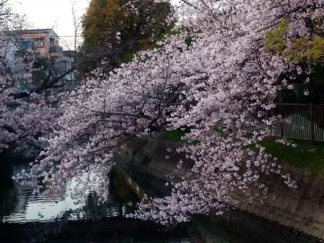 桜200406