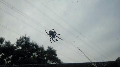 秋空と鬼蜘蛛カラスの蒼い空Z