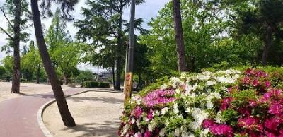 s-松塚公園4