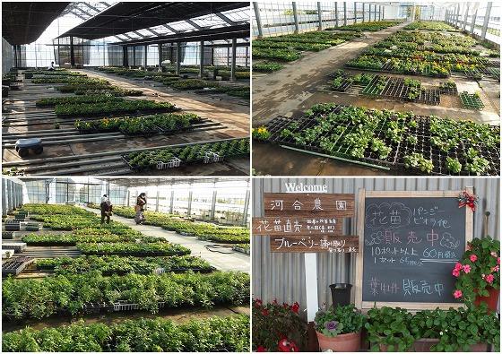201116河合農園-1