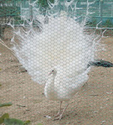 201126河合農園