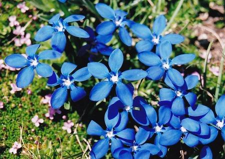 060711レンクフルーの花-1