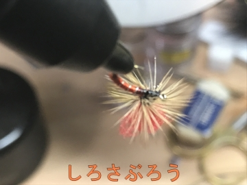 s-20200416005.jpg