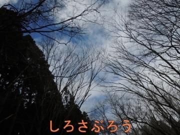 s-20200419001.jpg