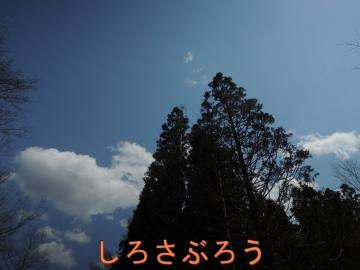 s-20200424038.jpg