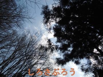 s-20200424072.jpg