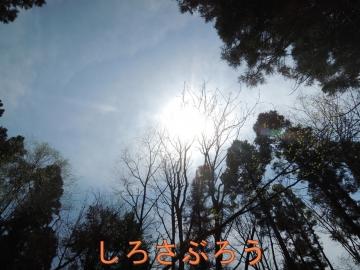 s-20200503005.jpg