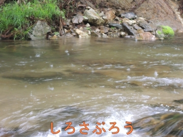 s-20200522019.jpg