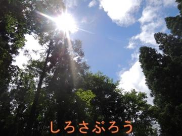 s-20200723009.jpg