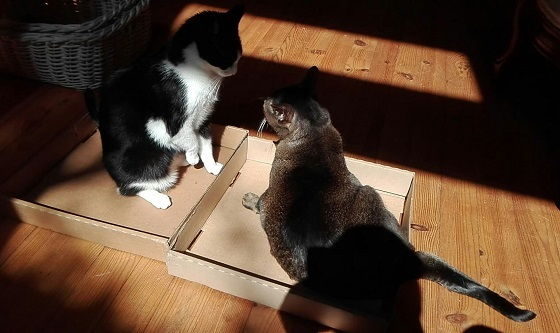 タマ&リュリュ、隔離