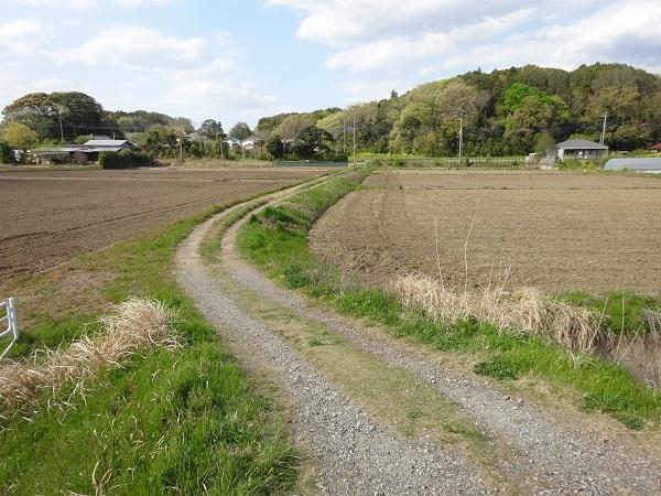 200411お散歩手賀沼 (5)