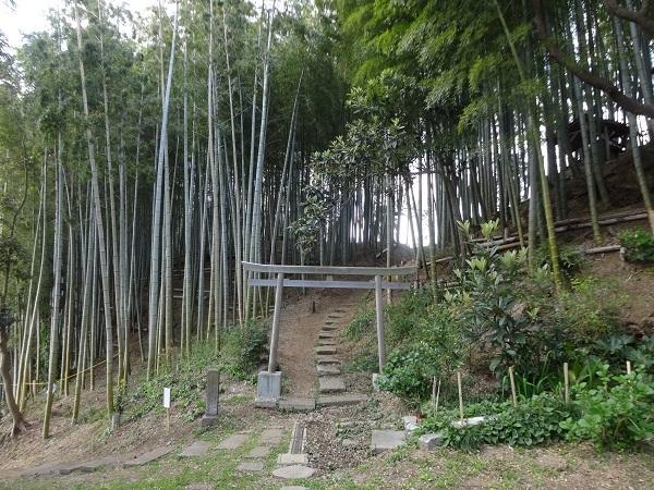 200411お散歩手賀沼 (9)
