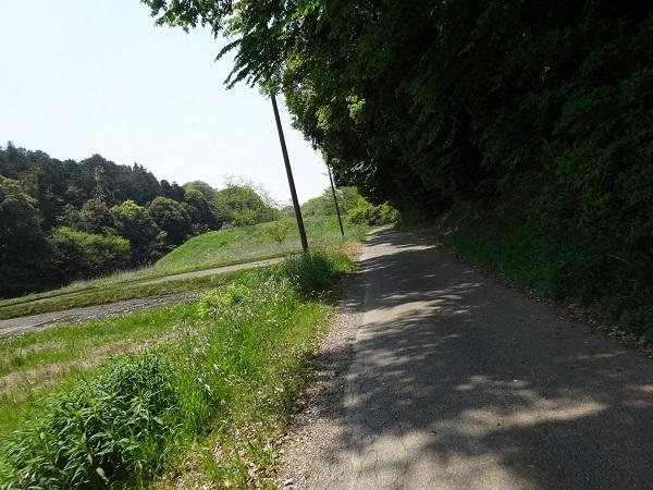 200502手賀沼他 (3)