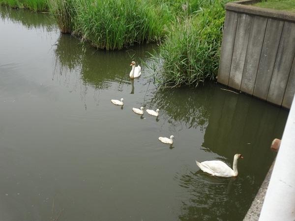 200606印旛沼と小貝川 (1)