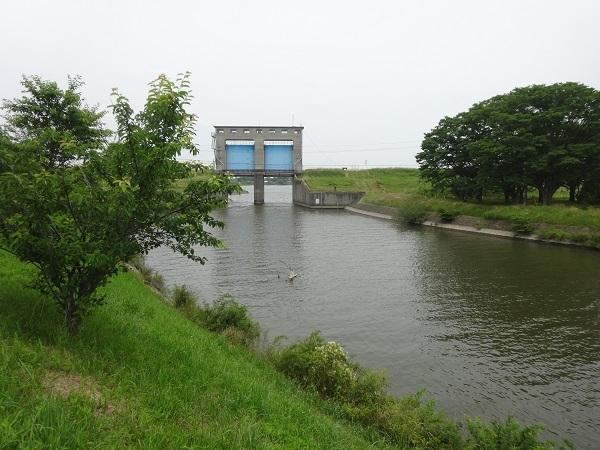 200606印旛沼と小貝川 (5)