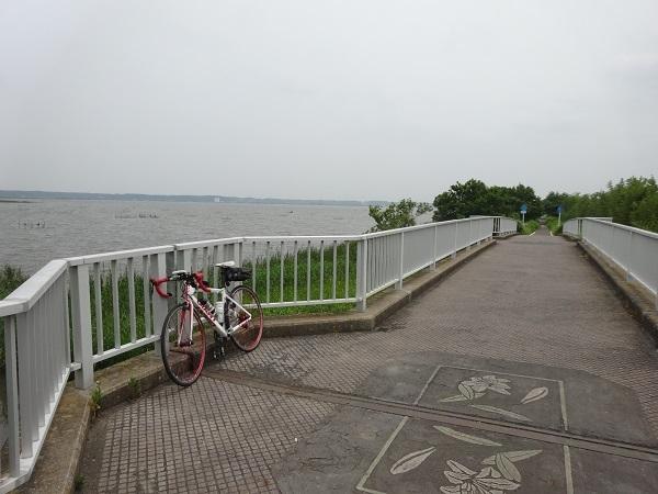 200606印旛沼と小貝川 (7)