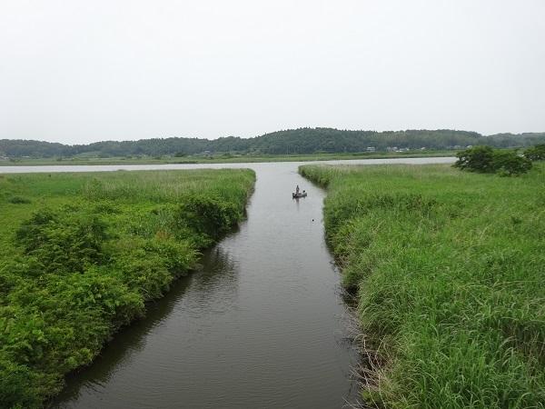 200606印旛沼と小貝川 (13)