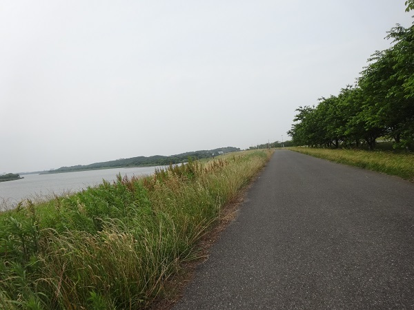 200606印旛沼と小貝川 (14)