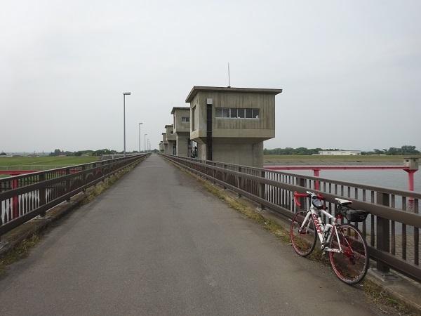 200606印旛沼と小貝川 (15)