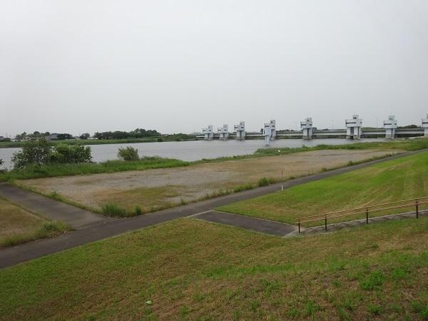 200606印旛沼と小貝川 (19)