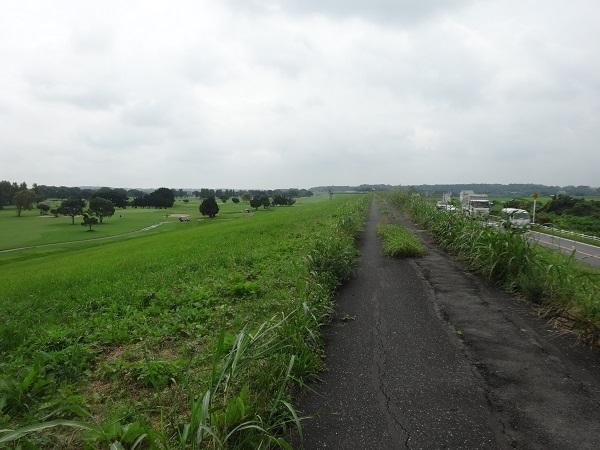 200724成田印旛沼 (1)