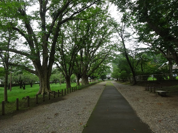 200724成田印旛沼 (13)