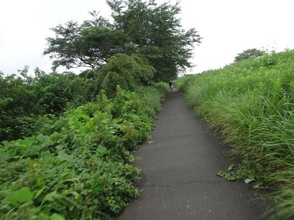 200724成田印旛沼 (16)