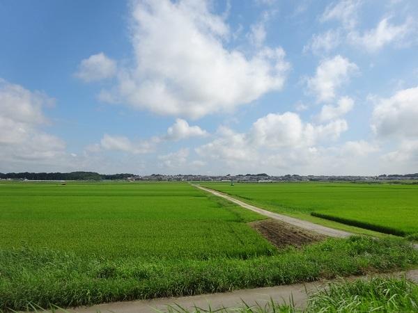 200801蓮沼+飯高 (1)