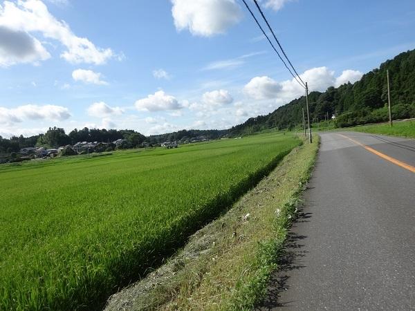 200801蓮沼+飯高 (34)