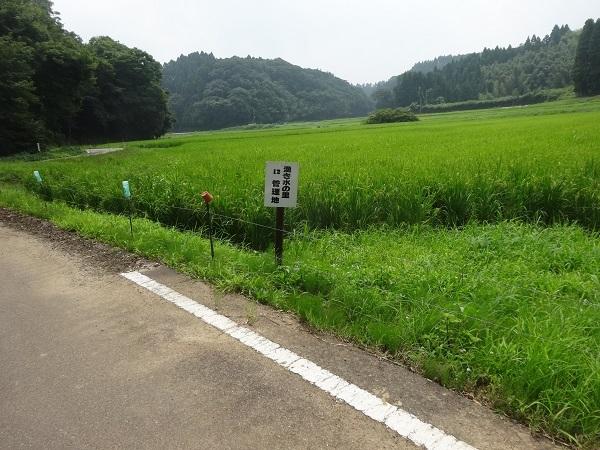200808秋元牧場_長生き展望台 (9)