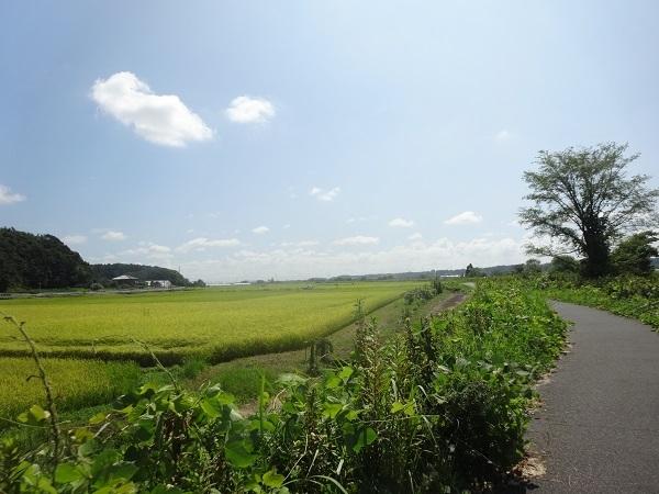 200829印旛沼周辺 (1)