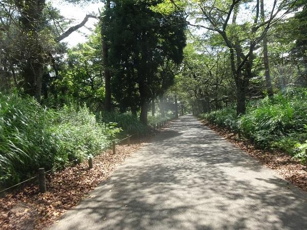 200829印旛沼周辺 (9)