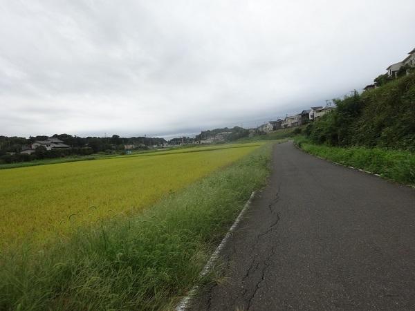 200919ご近所 (11)