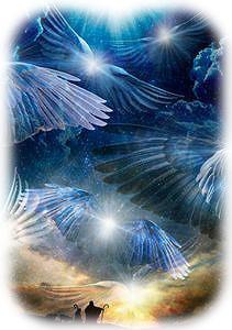 羽がいっぱい