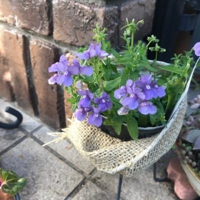 庭花IMG_8428
