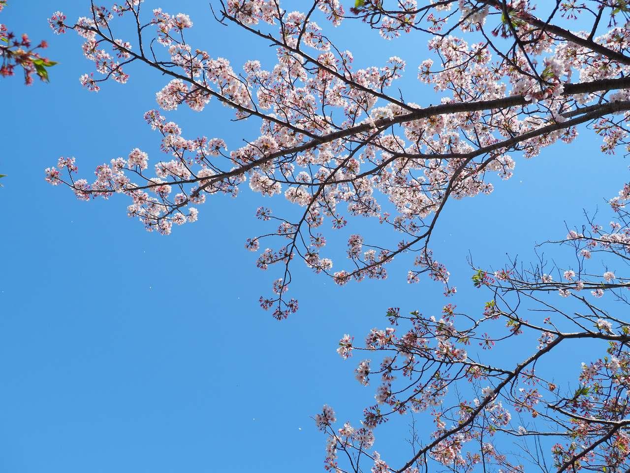 散る桜2020年4月
