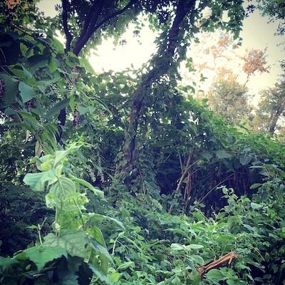 ジャングル化。