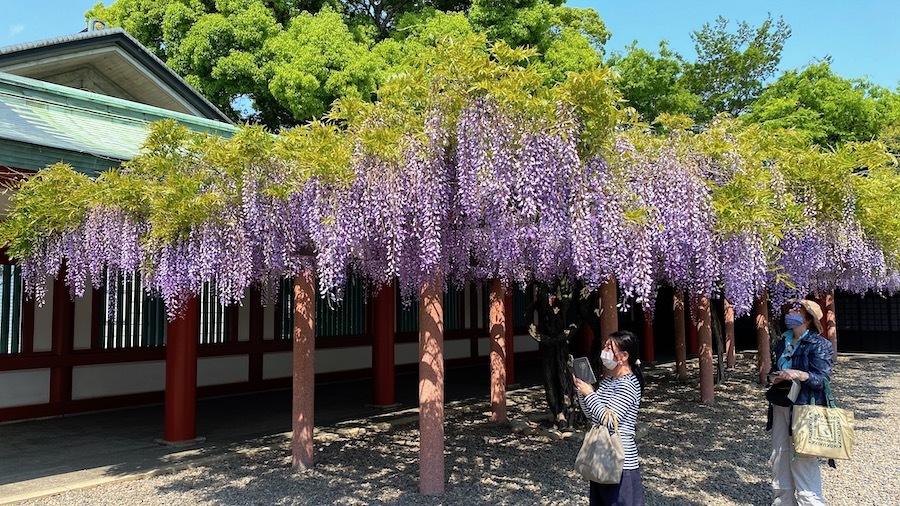 「日枝神社の前方後円墳」12