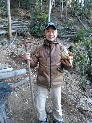 タケノコの収穫