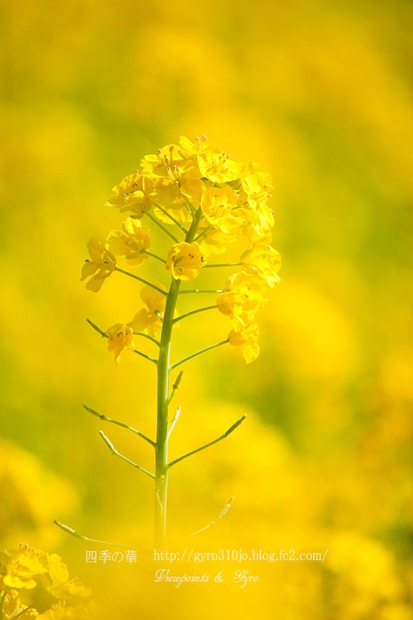 春の花 A1