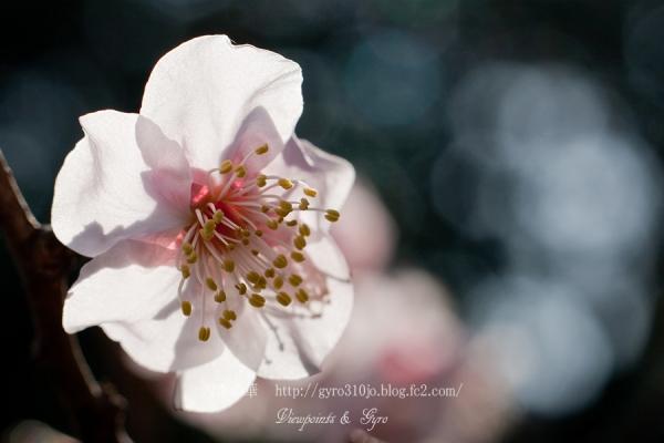 春の花 D4
