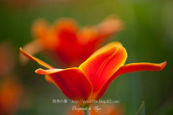 春の花 A2