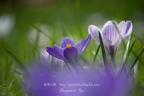 春の花 A3