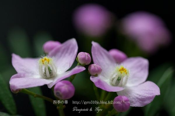 春の花 A4